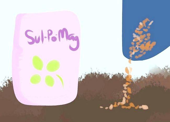 Imagine cu titlul Adăugați potasiu într-o grădină organică Pasul 7