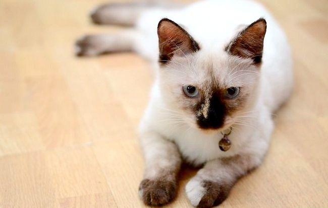 Cum să verificați pisicile pentru deshidratare