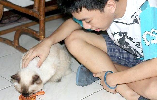 Imagine intitulată Ajutor Pisici rătăcitori Pasul 1