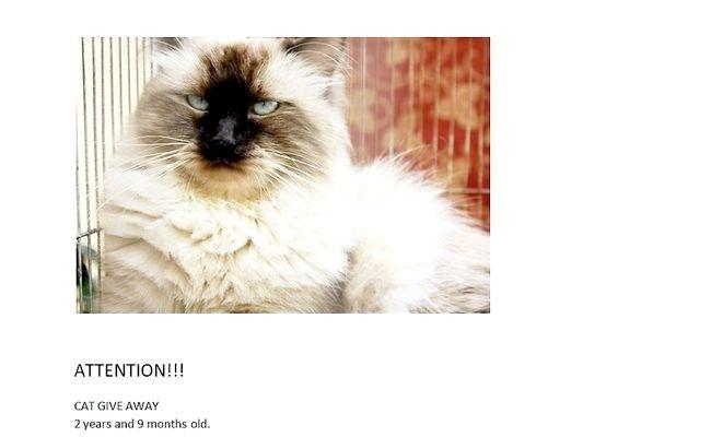 Imagine intitulată Ajutor Pisici rătăcitori Pasul 3