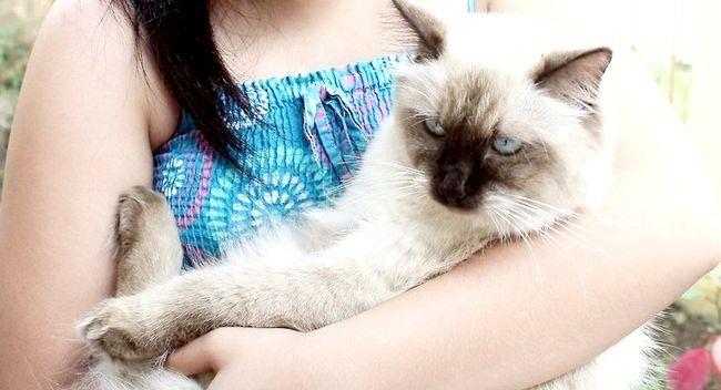 Imagine intitulată Ajutor pentru pisici stricate Pasul 7
