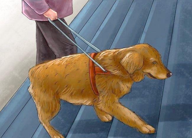 Imagine intitulată Ajută-i unui câine să-și depășească frica de scări Pasul 7