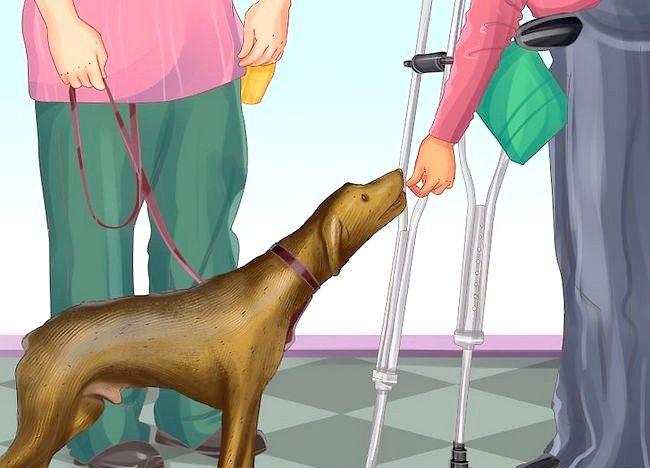 Imaginea intitulată Obțineți un serviciu de câine dacă sunteți` class=