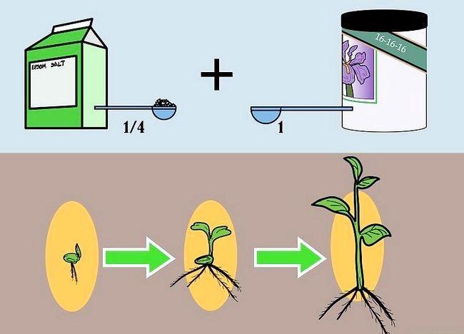 Imaginea intitulată Plante de alimentare într-un sistem hidroponic folosind Maxsea Pasul 2