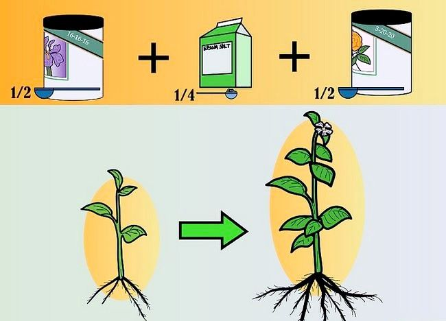 Imaginea intitulată Plante de alimentare într-un sistem hidroponic folosind Maxsea Pasul 3