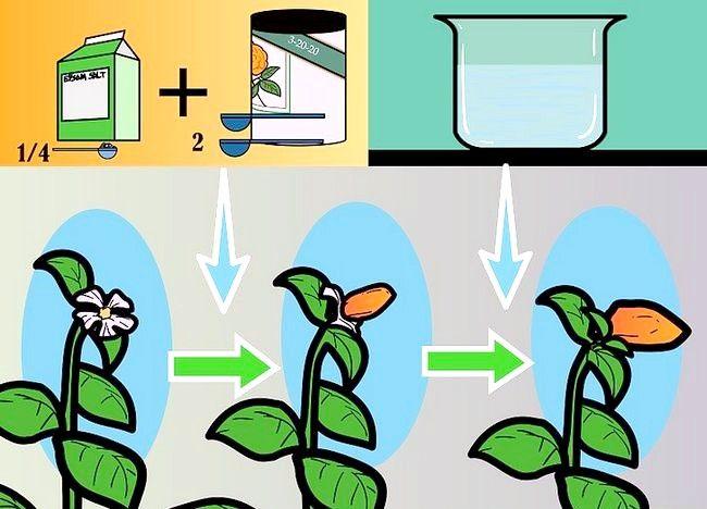 Imaginea intitulată Plante de alimentare într-un sistem de hidroponie folosind Maxsea Pasul 4