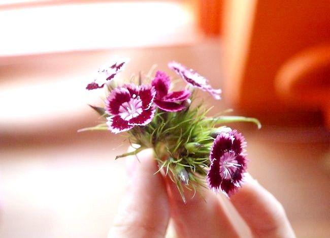 Imaginea intitulată Aranjați un buchet de flori Pasul 1