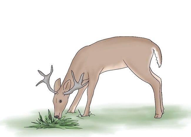 Cum de a atrage Deer