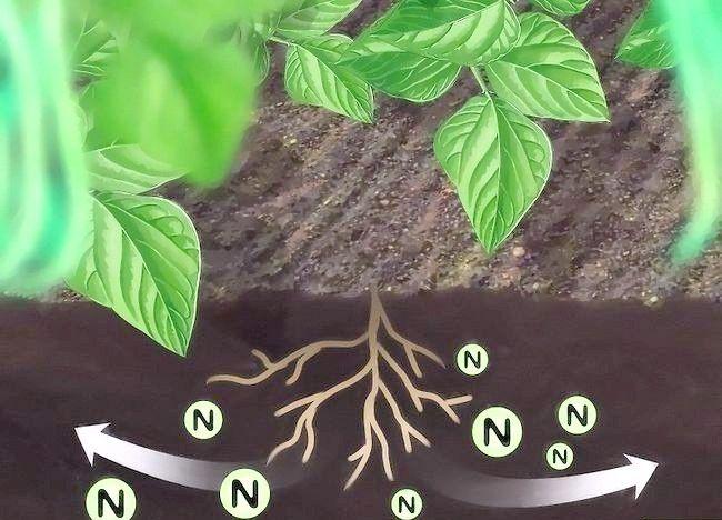 Imaginea intitulată Creșterea azotului în sol 1