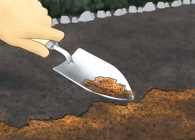 Imaginea intitulată Creșterea azotului în sol. Pasul 2