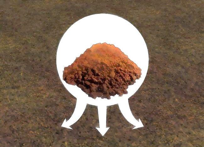 Imaginea intitulată Creșterea azotului în sol. Pasul 3