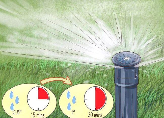 Imaginea intitulată Calibrați sprinklerele dvs. Pasul 7