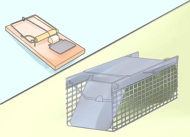 Cum să capturați șoareci
