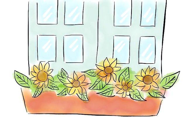 Imagine intitulată Crearea unei grădini de grădină Pasul 11