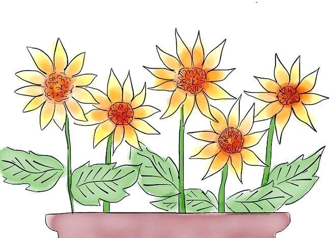 Imaginea intitulată Creați o grădină de cabină Pasul 3