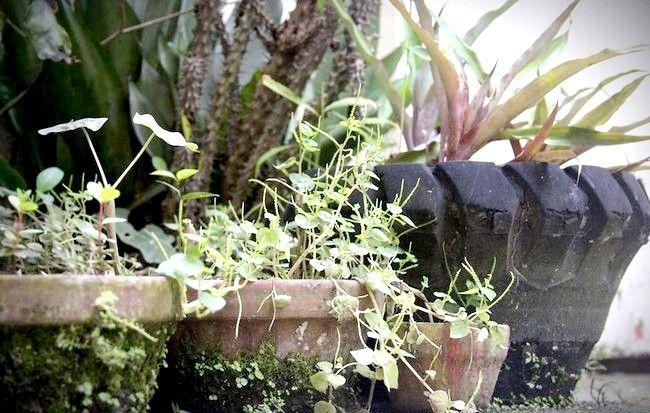 Imaginea intitulată Creați o grădină rustică de flori Pasul 1