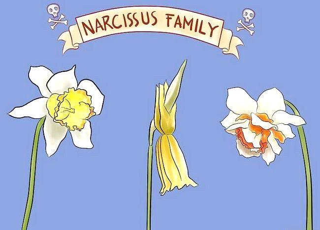 Imaginea intitulată Îngrijire pentru lalele proaspete tăiate Pasul 12