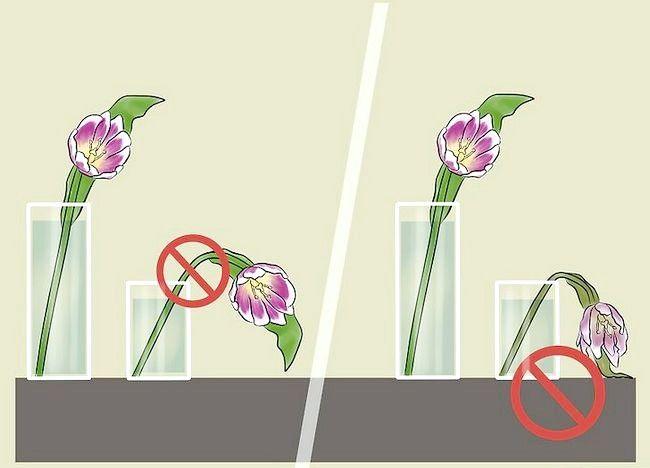 Imaginea intitulată Îngrijire pentru lalele proaspete tăiate Pasul 5
