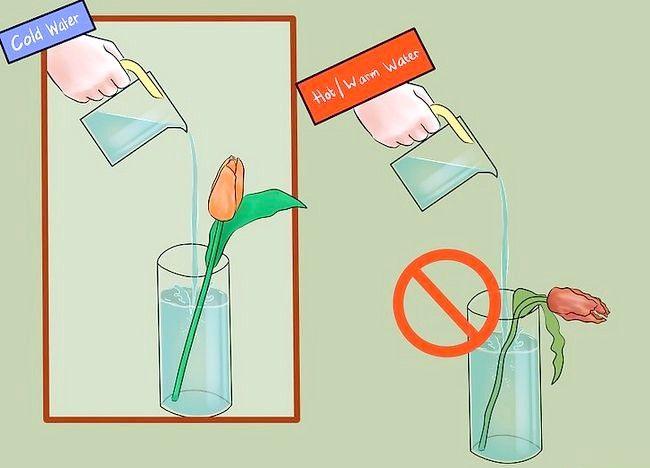 Imagine intitulată Îngrijire pentru lalele proaspete tăiate Pasul 7