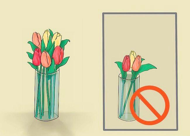 Imagine intitulată Îngrijire pentru lalele proaspete tăiate Pasul 8
