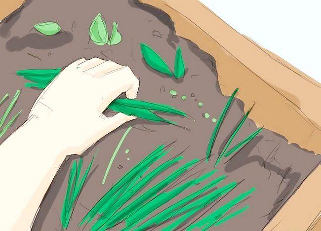 Imagine intitulată Începeți o grădină ecologică Pasul 2