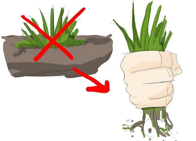 Imagine intitulată Începeți o grădină ecologică Pasul 4
