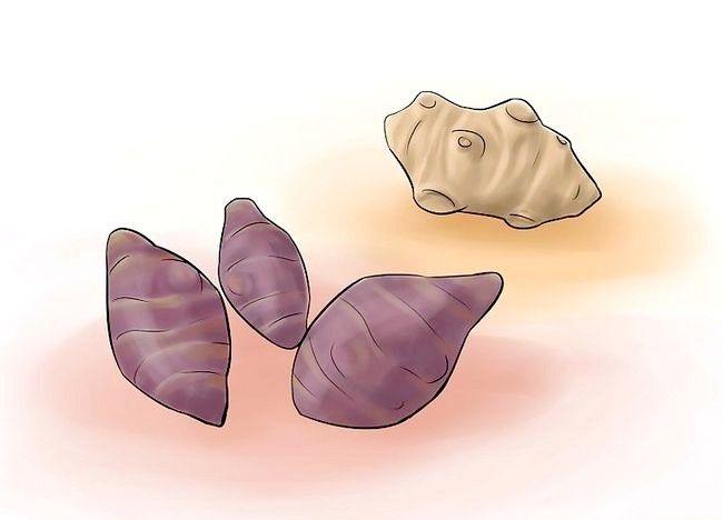 Cum sa cresti legumele perene