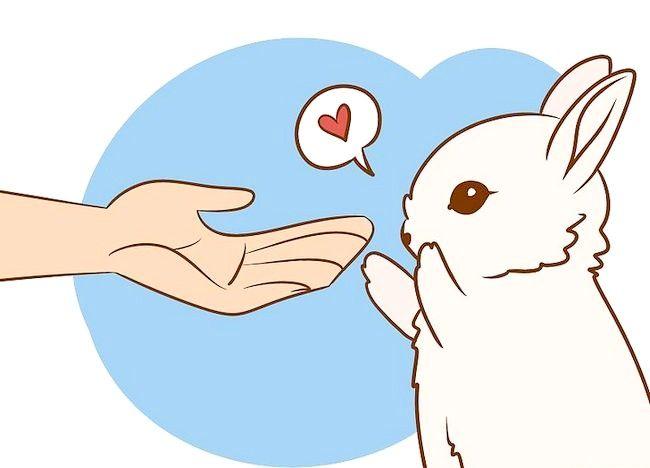 Imaginea intitulată Asigurați-vă că iepurele are cea mai bună viață pe care o puteți da Pasul 2