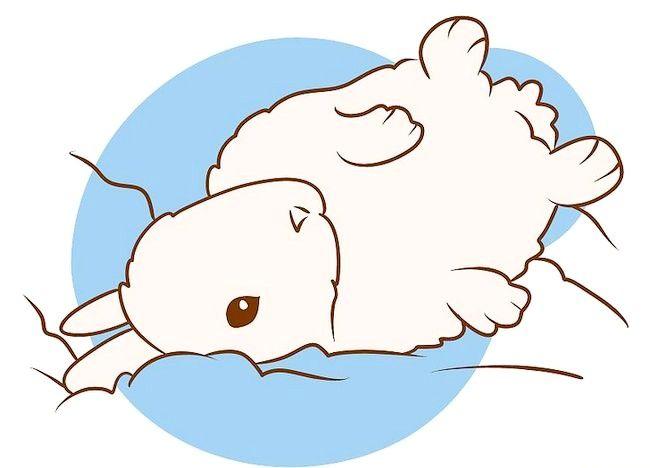 Imaginea intitulată Asigurați-vă că iepurele dvs. are cea mai bună viață pe care o puteți da Pasul 4