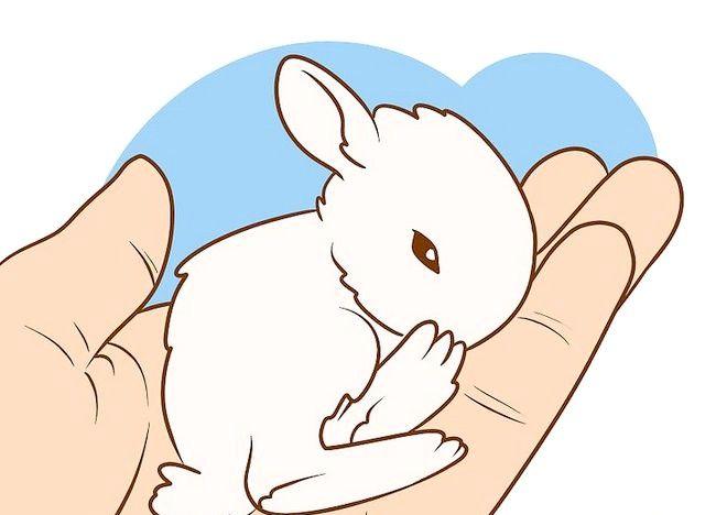 Imaginea intitulată Asigurați-vă că iepurele dvs. are cea mai bună viață pe care o puteți da Pasul 5