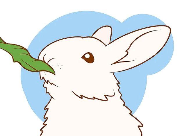Imaginea intitulată Asigurați-vă că iepurele are cea mai bună viață pe care o puteți da Pasul 6