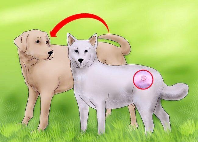 Imaginea intitulată Verificați câinele pentru cicatrici Pasul 3