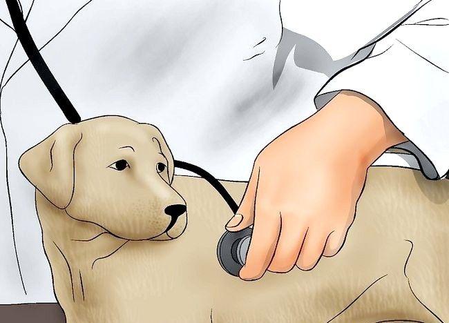 Imaginea intitulată Verificați câinele pentru cicatrice Pasul 8