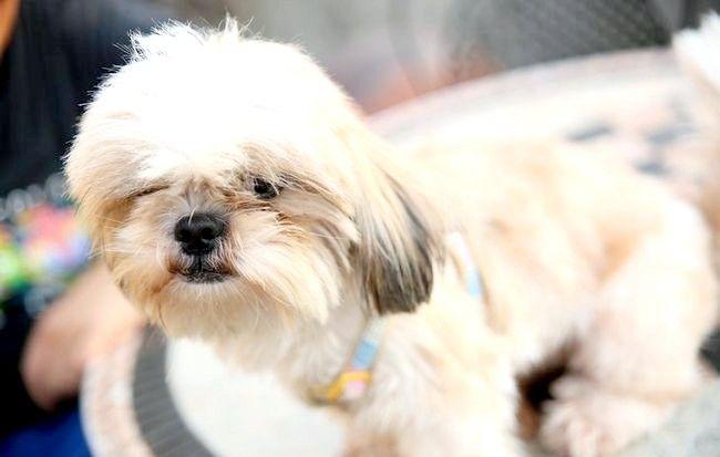 Imaginea intitulată Reducerea alergiilor la câini Pasul 3