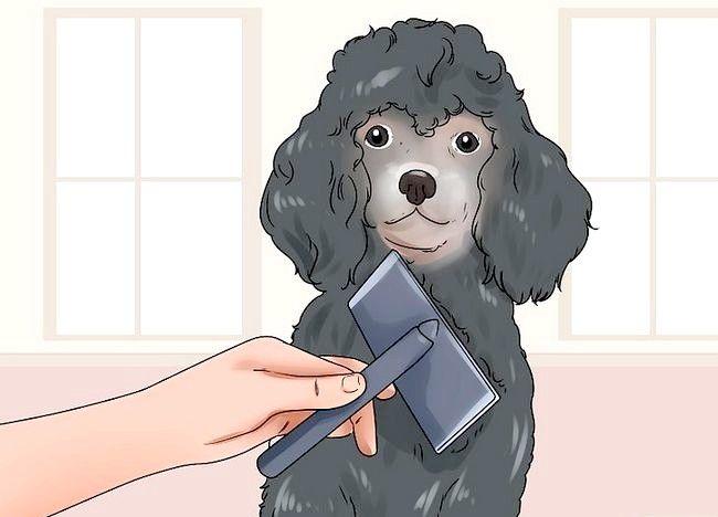 Imaginea intitulată Reducerea suprapunerii la câini Pasul 5