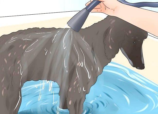 Imaginea intitulată Reducerea suprapunerii la câini Pasul 7