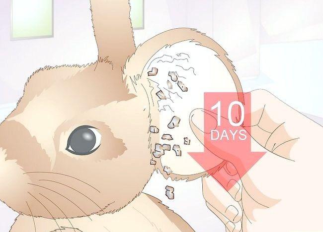 Imaginea intitulată Împiedică acarienii la iepuri Pasul 11