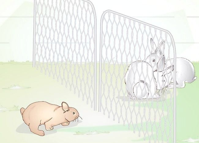 Imaginea intitulată Împiedică acarienii la iepuri Pasul 2