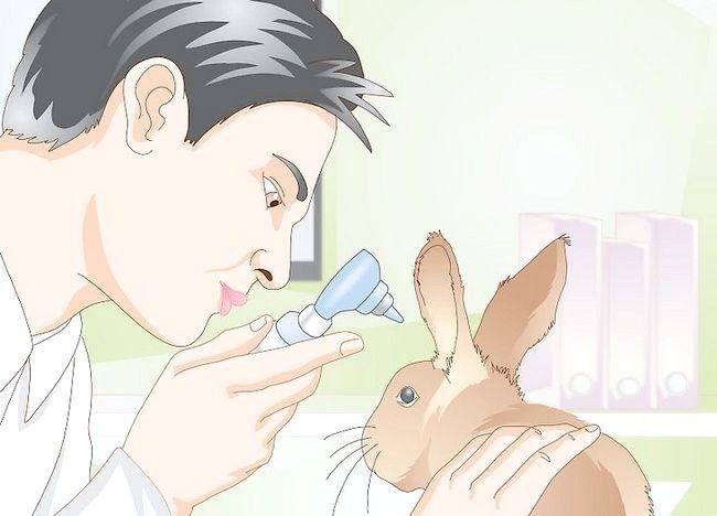 Imaginea intitulată Împiedică acarienii la iepuri Pasul 7