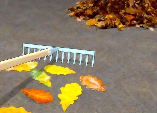 Imagine intitulată Frunze de compost Pasul 2