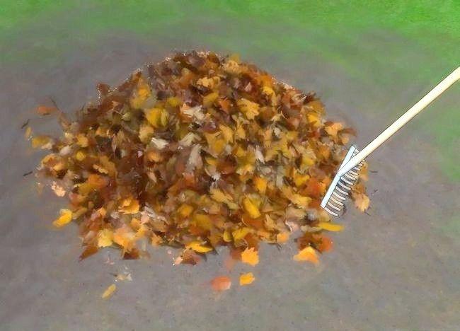 Imagine intitulată Frunze de compost Pasul 4