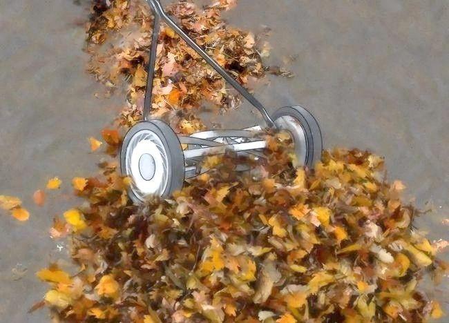 Imaginea intitulată Frunze de compost Pasul 7