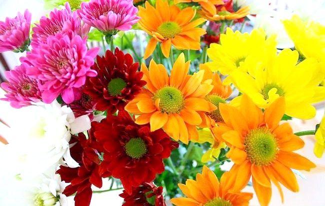 Imaginea intitulată Aranjați flori Intro