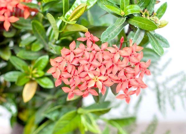Imaginea intitulă Aranjamente florale pentru ambarcațiunile Pasul 1