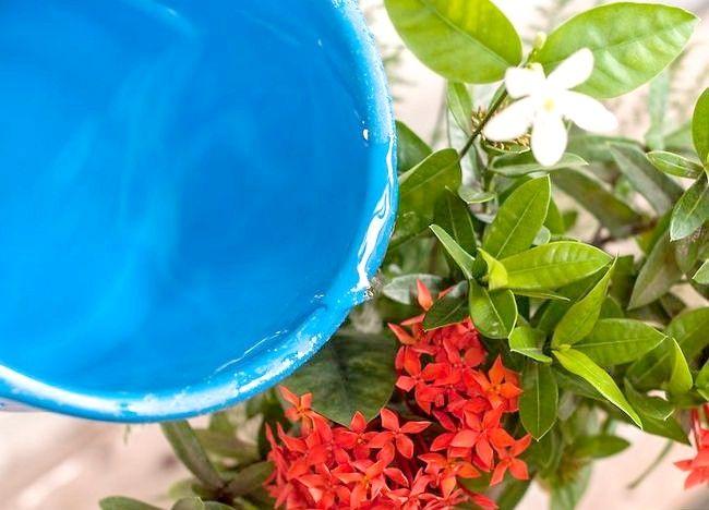 Imaginea intitulă Aranjamente florale pentru ambarcațiunile Pasul 11