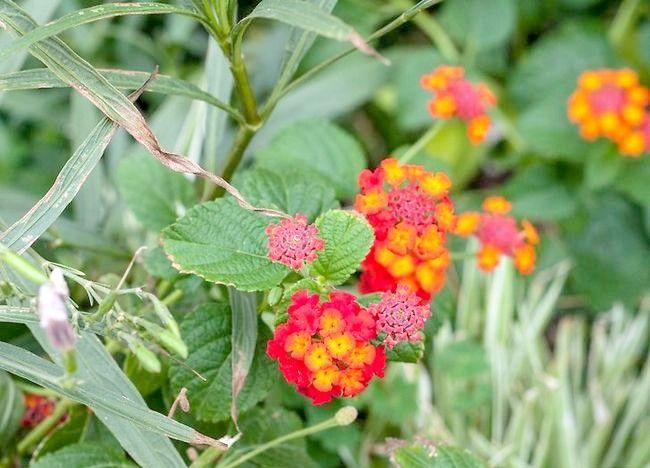 Imaginea intitulă Aranjamente florale pentru ambarcațiunile Pasul 12