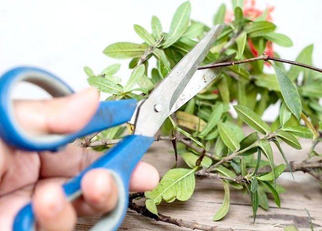 Imaginea intitulă Aranjamente florale pentru ambarcațiunile Pasul 7