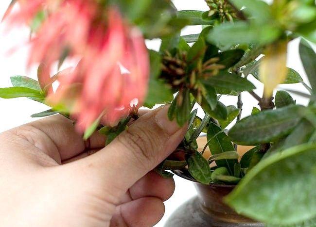 Imaginea intitulă Aranjamente florale pentru ambarcațiunile Pasul 9