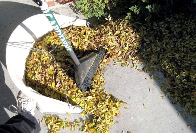 Imaginea intitulată Frunzele căzute sunt o mare sursă de materie brună.