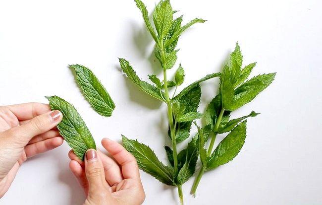 Imaginea intitulată Faceți frunze de mentă preparată Pasul 1